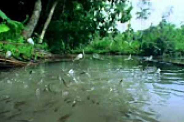 San Antonio de Padua. Milagro de los peces. Vida de San Antonio de Padua