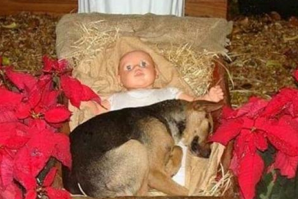 El perrito abandonado que conmovió a una ciudad al encontrar consuelo en el pesebre