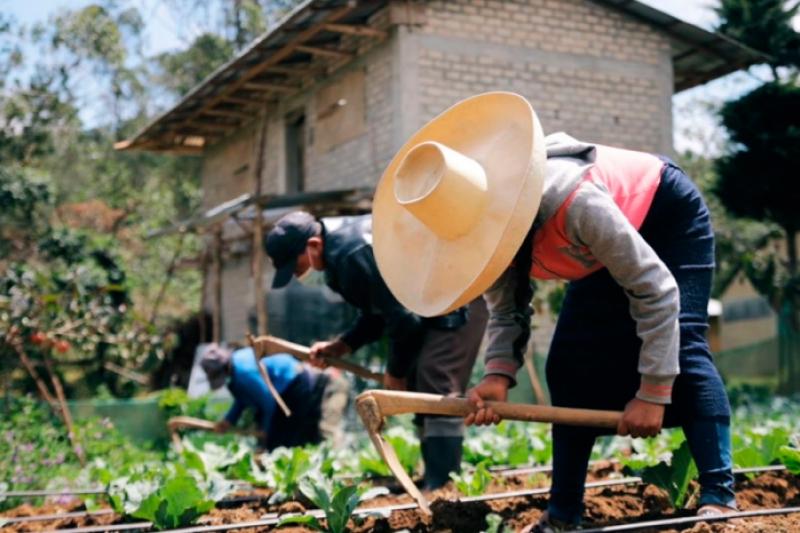 La COVID-19 aumenta en más de 100 millones el número de personas que padecen hambre