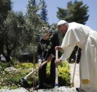 El Vaticano libre del plástico en 2019, tras encíclica del Papa